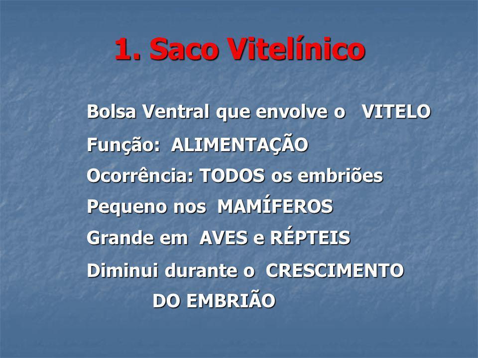 1. Saco Vitelínico Bolsa Ventral que envolve o VITELO Bolsa Ventral que envolve o VITELO Função: ALIMENTAÇÃO Função: ALIMENTAÇÃO Ocorrência: TODOS os