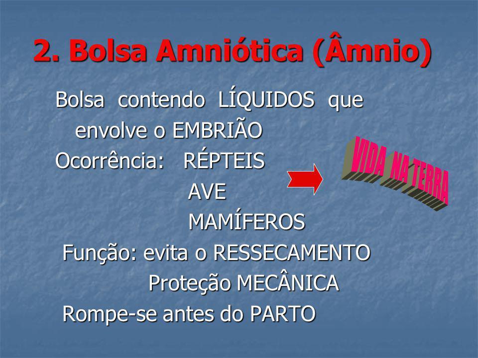 2. Bolsa Amniótica (Âmnio) Bolsa contendo LÍQUIDOS que Bolsa contendo LÍQUIDOS que envolve o EMBRIÃO envolve o EMBRIÃO Ocorrência: RÉPTEIS Ocorrência: