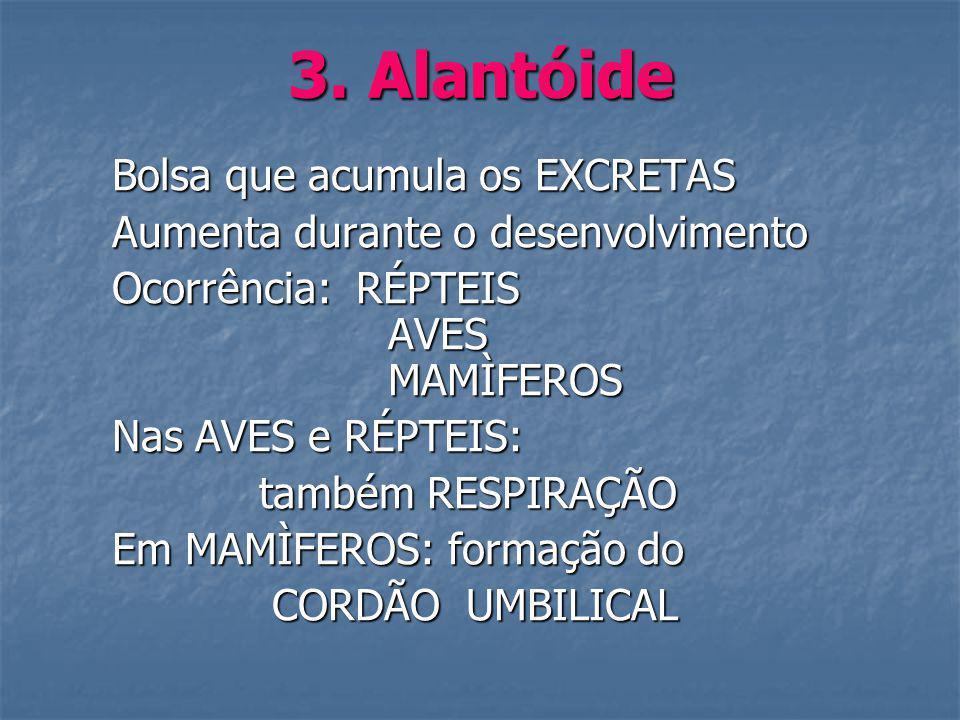 3. Alantóide Bolsa que acumula os EXCRETAS Bolsa que acumula os EXCRETAS Aumenta durante o desenvolvimento Aumenta durante o desenvolvimento Ocorrênci
