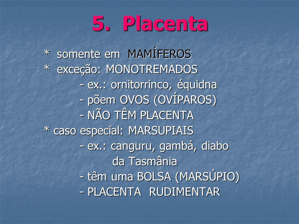 5. Placenta * somente em MAMÍFEROS * somente em MAMÍFEROS * exceção: MONOTREMADOS * exceção: MONOTREMADOS - ex.: ornitorrinco, équidna - ex.: ornitorr