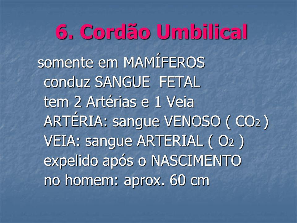 6. Cordão Umbilical somente em MAMÍFEROS somente em MAMÍFEROS conduz SANGUE FETAL conduz SANGUE FETAL tem 2 Artérias e 1 Veia tem 2 Artérias e 1 Veia