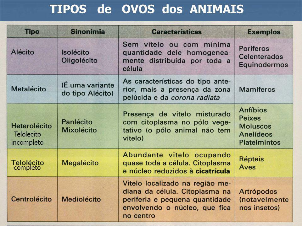 TIPOS de OVOS dos ANIMAIS completo Telolecito incompleto