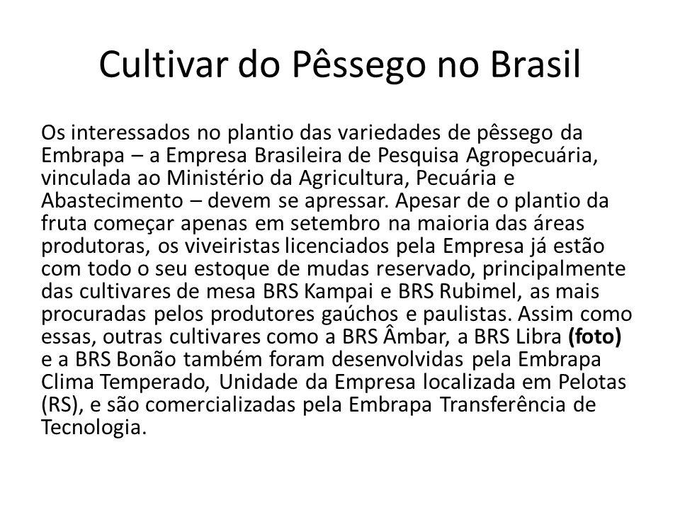 Cultivar do Pêssego no Brasil Os interessados no plantio das variedades de pêssego da Embrapa – a Empresa Brasileira de Pesquisa Agropecuária, vincula