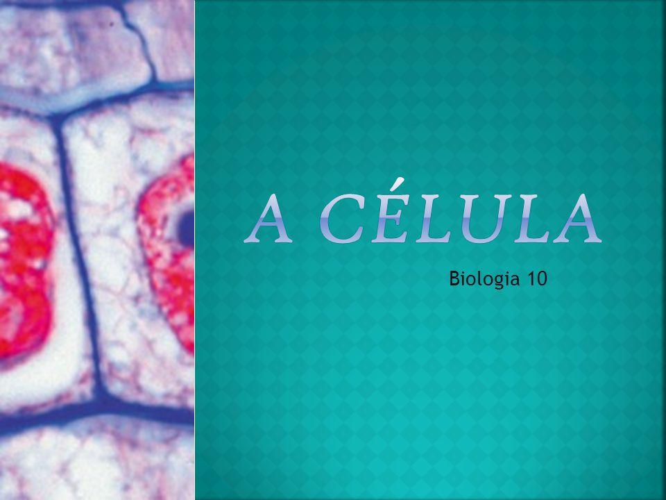  Membrana Plasmática – é responsável pela troca de substâncias entre o meio extracelular e o meio intracelular.