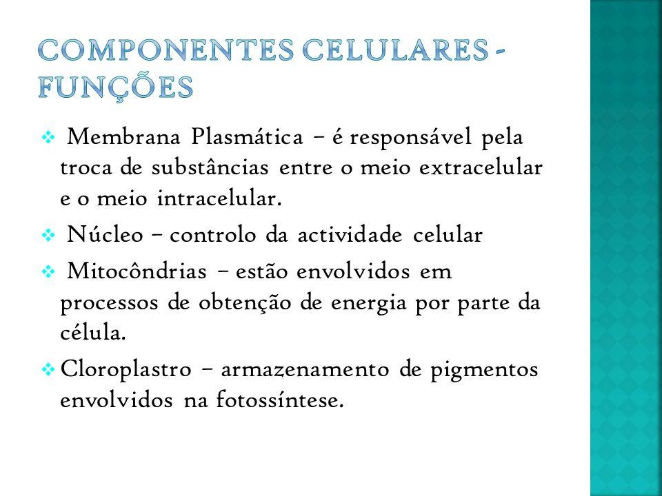  Membrana Plasmática – é responsável pela troca de substâncias entre o meio extracelular e o meio intracelular.  Núcleo – controlo da actividade cel