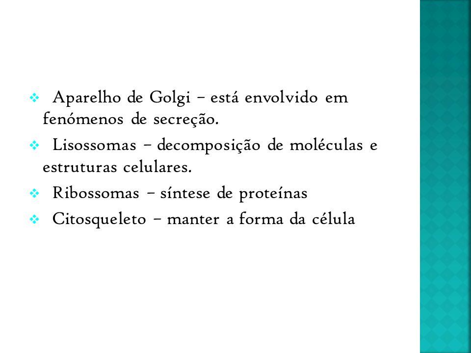  Aparelho de Golgi – está envolvido em fenómenos de secreção.  Lisossomas – decomposição de moléculas e estruturas celulares.  Ribossomas – síntese