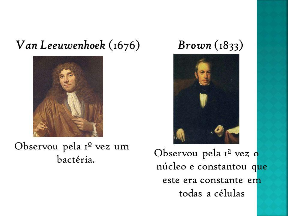 Observou pela 1º vez um bactéria. Observou pela 1ª vez o núcleo e constantou que este era constante em todas a células Van Leeuwenhoek (1676) Brown (1