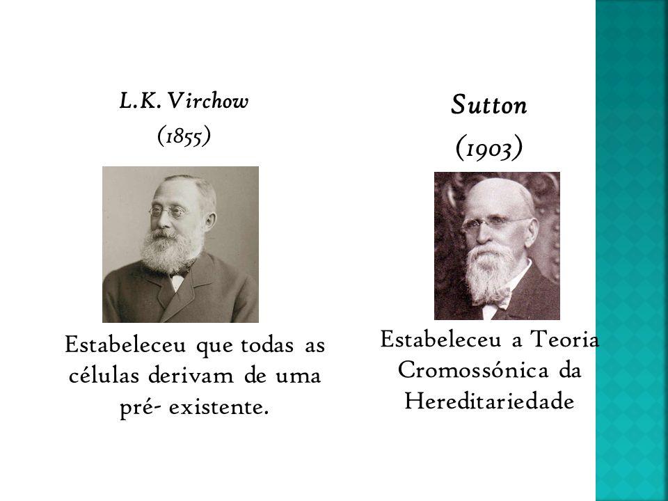 L.K. Virchow (1855) Estabeleceu que todas as células derivam de uma pré- existente. Estabeleceu a Teoria Cromossónica da Hereditariedade Sutton (1903)