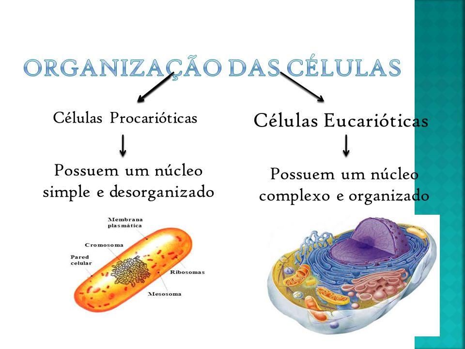 Polissacarídeos Formados por O, C e H Oligossacarídeos Monossacídeos Unidade estrutural dos glícidos Constitução: 3C – trioses 4 C – tetraoses 5C – pentoses (glicose) 6 C – heptoses (frutose) Conjunto de 2 a 10 monossacarídeos que estam interligados entre si.