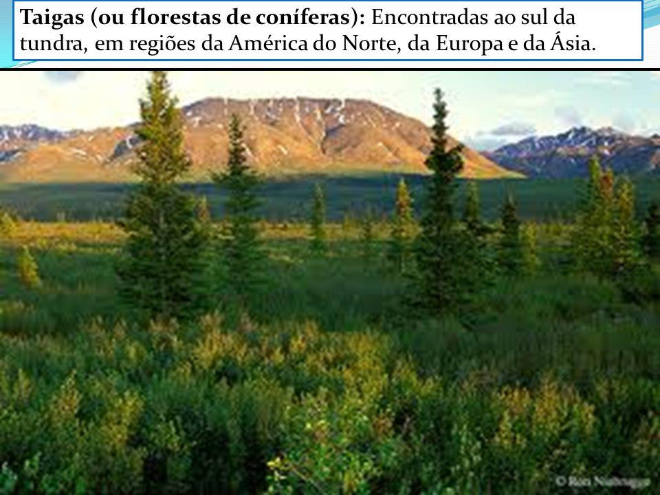 Taigas (ou florestas de coníferas): Encontradas ao sul da tundra, em regiões da América do Norte, da Europa e da Ásia.