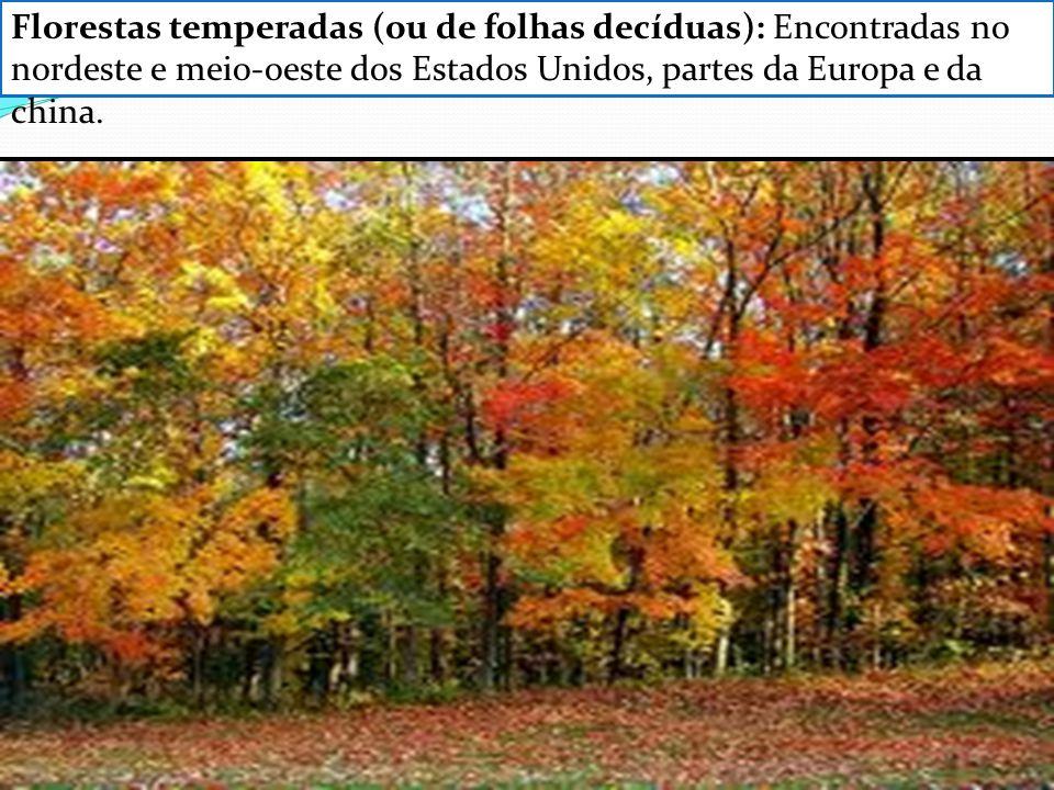 Florestas temperadas (ou de folhas decíduas): Encontradas no nordeste e meio-oeste dos Estados Unidos, partes da Europa e da china.