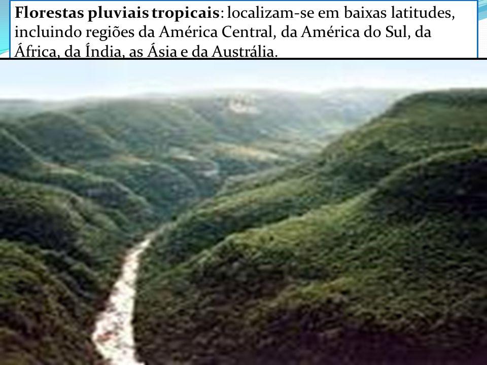 Florestas pluviais tropicais: localizam-se em baixas latitudes, incluindo regiões da América Central, da América do Sul, da África, da Índia, as Ásia