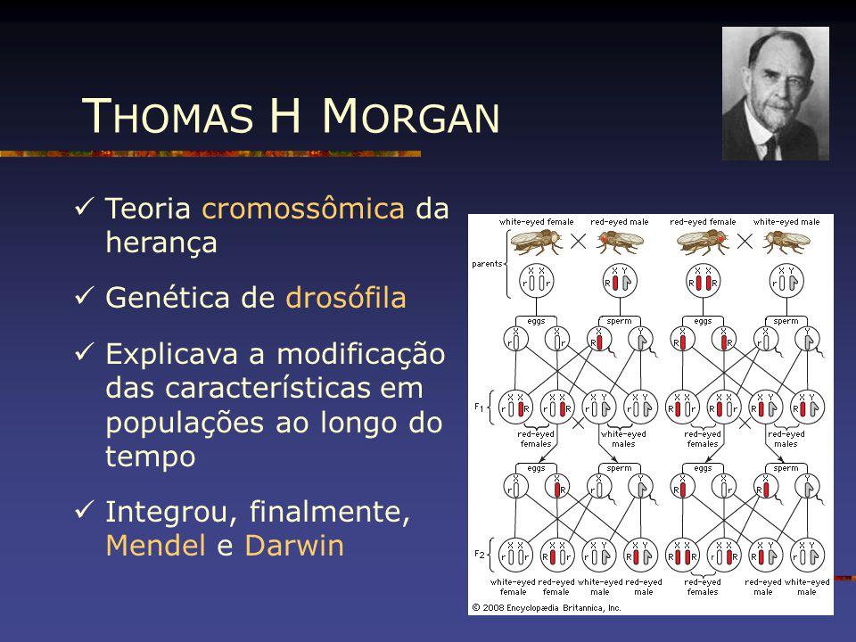 Teoria cromossômica da herança Genética de drosófila Explicava a modificação das características em populações ao longo do tempo Integrou, finalmente,