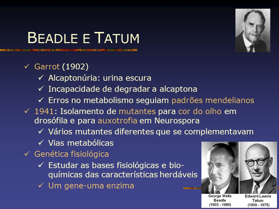 Garrot (1902) Alcaptonúria: urina escura Incapacidade de degradar a alcaptona Erros no metabolismo seguiam padrões mendelianos 1941: Isolamento de mut