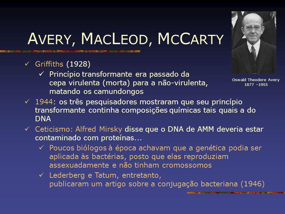 Oswald Theodore Avery 1877 –1955 Griffiths (1928) Princípio transformante era passado da cepa virulenta (morta) para a não-virulenta, matando os camun