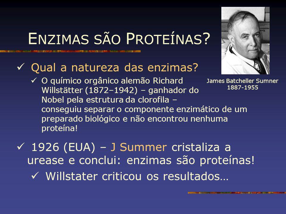 E NZIMAS SÃO P ROTEÍNAS ? Qual a natureza das enzimas? O químico orgânico alemão Richard Willstätter (1872–1942) – ganhador do Nobel pela estrutura da