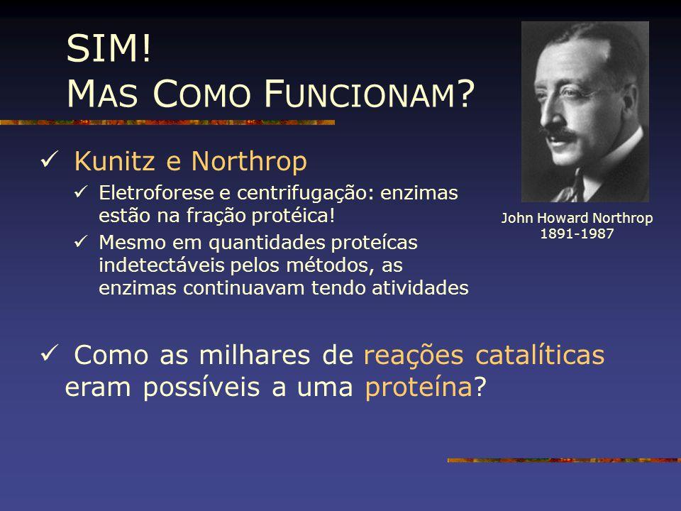 SIM! M AS C OMO F UNCIONAM ? Kunitz e Northrop Eletroforese e centrifugação: enzimas estão na fração protéica! Mesmo em quantidades proteícas indetect