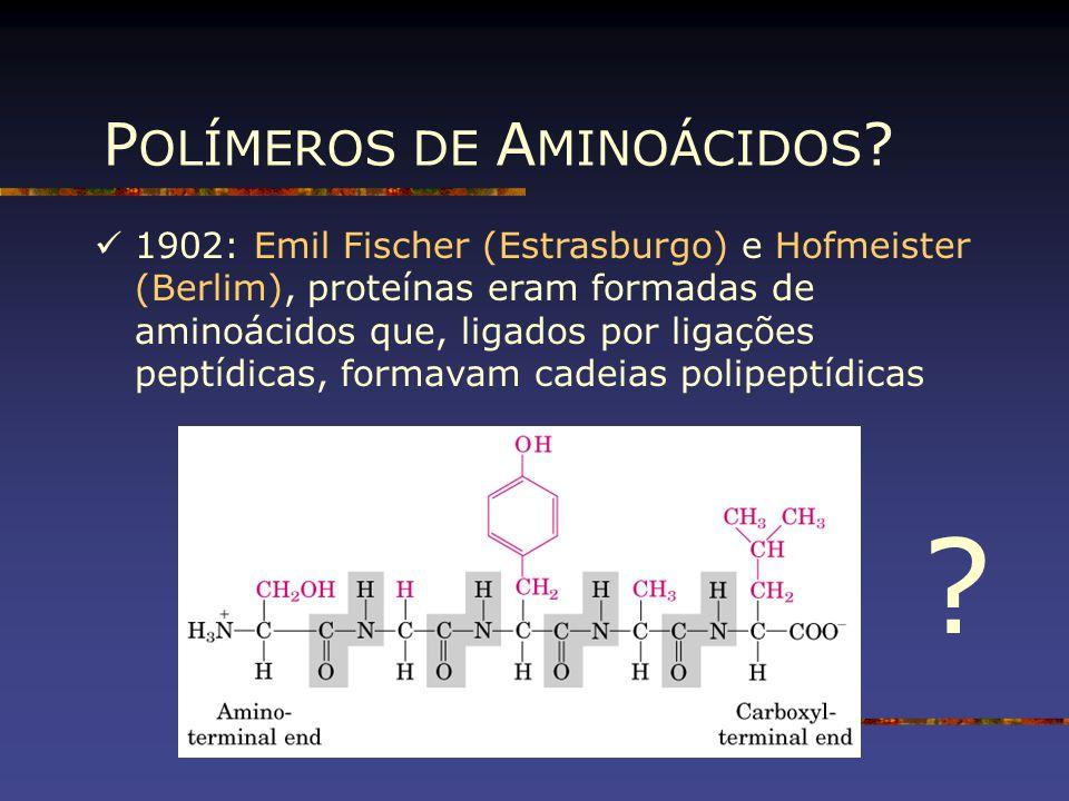 1902: Emil Fischer (Estrasburgo) e Hofmeister (Berlim), proteínas eram formadas de aminoácidos que, ligados por ligações peptídicas, formavam cadeias
