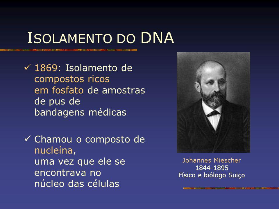 I SOLAMENTO DO DNA Johannes Miescher 1844-1895 Físico e biólogo Suiço 1869: Isolamento de compostos ricos em fosfato de amostras de pus de bandagens m