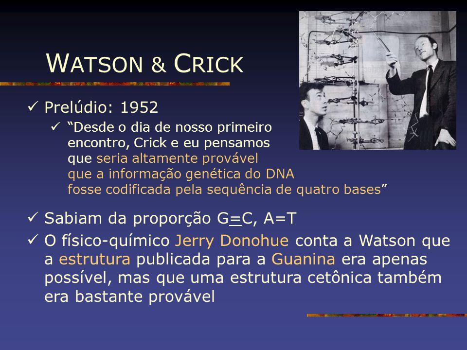 """W ATSON & C RICK Prelúdio: 1952 """"Desde o dia de nosso primeiro encontro, Crick e eu pensamos que seria altamente provável que a informação genética do"""