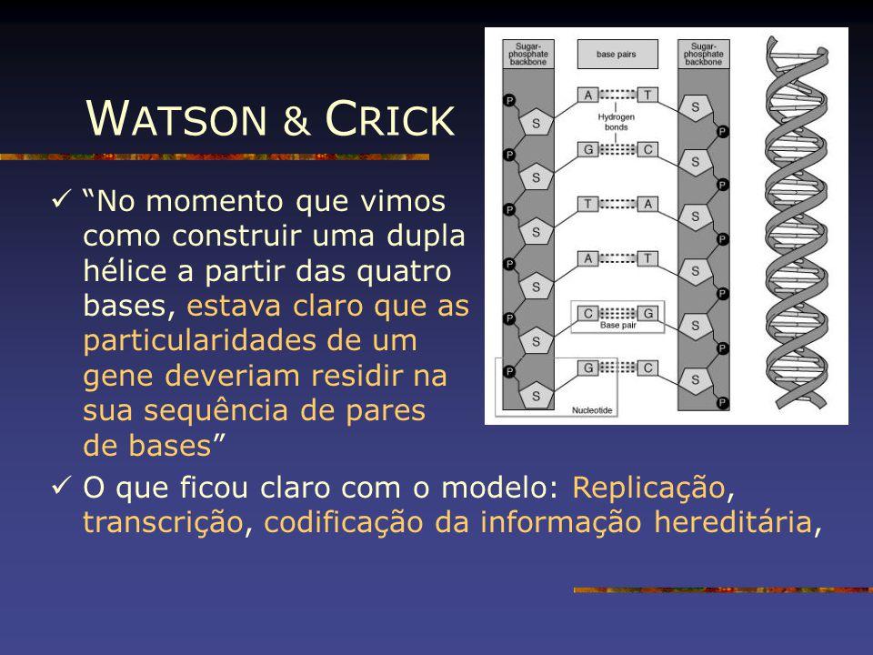 """W ATSON & C RICK """"No momento que vimos como construir uma dupla hélice a partir das quatro bases, estava claro que as particularidades de um gene deve"""