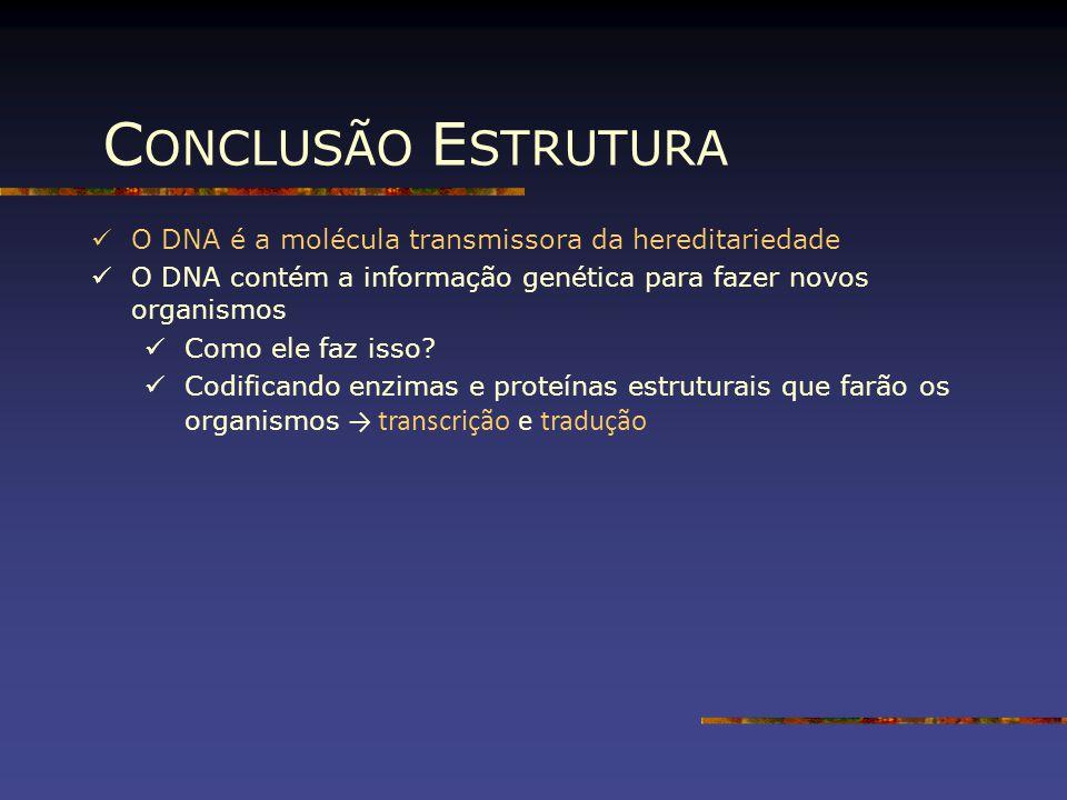 C ONCLUSÃO E STRUTURA O DNA é a molécula transmissora da hereditariedade O DNA contém a informação genética para fazer novos organismos Como ele faz i