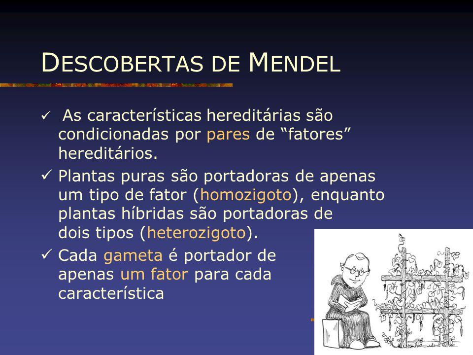 """D ESCOBERTAS DE M ENDEL As características hereditárias são condicionadas por pares de """"fatores"""" hereditários. Plantas puras são portadoras de apenas"""