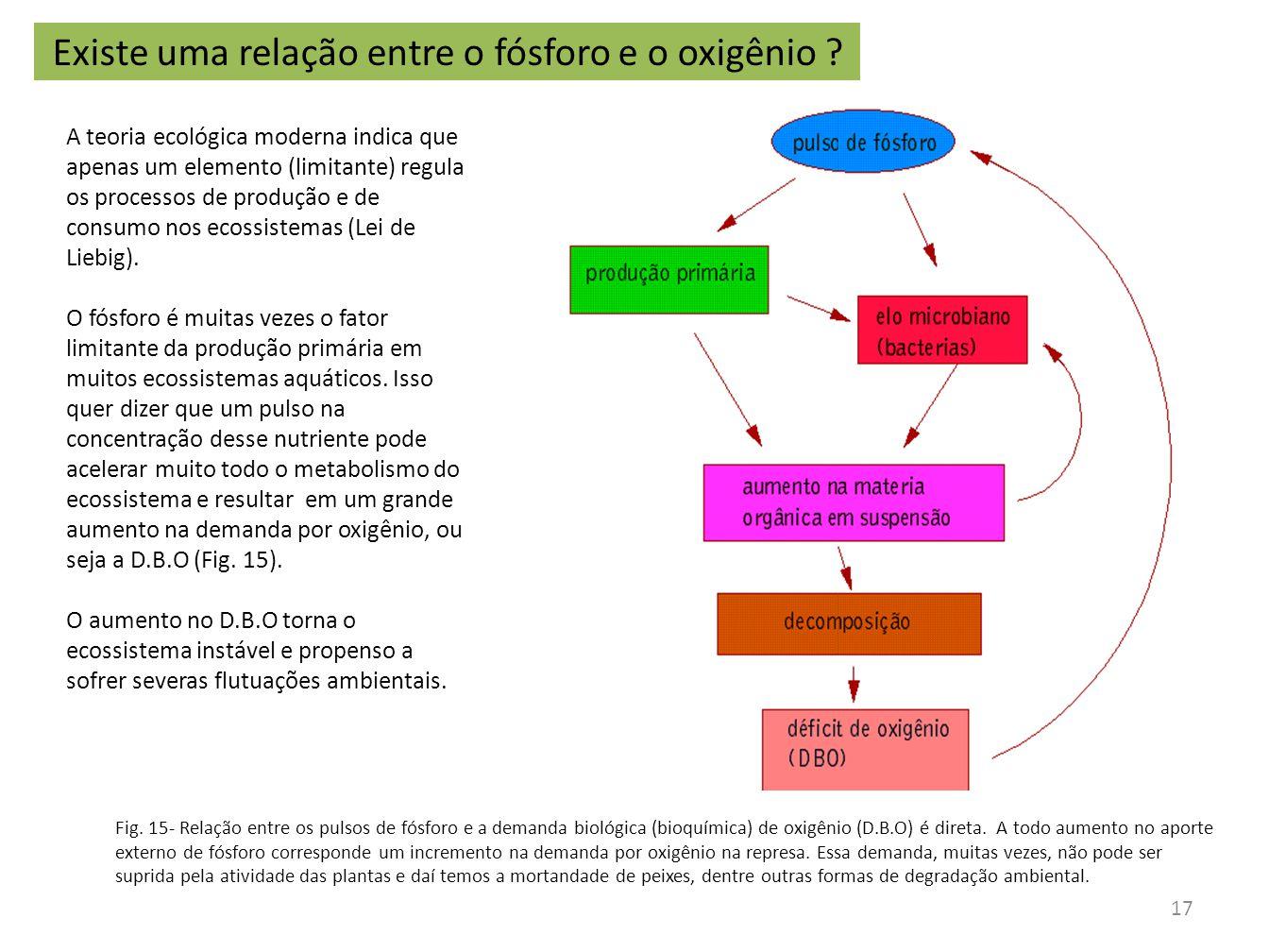 Fig. 15- Relação entre os pulsos de fósforo e a demanda biológica (bioquímica) de oxigênio (D.B.O) é direta. A todo aumento no aporte externo de fósfo