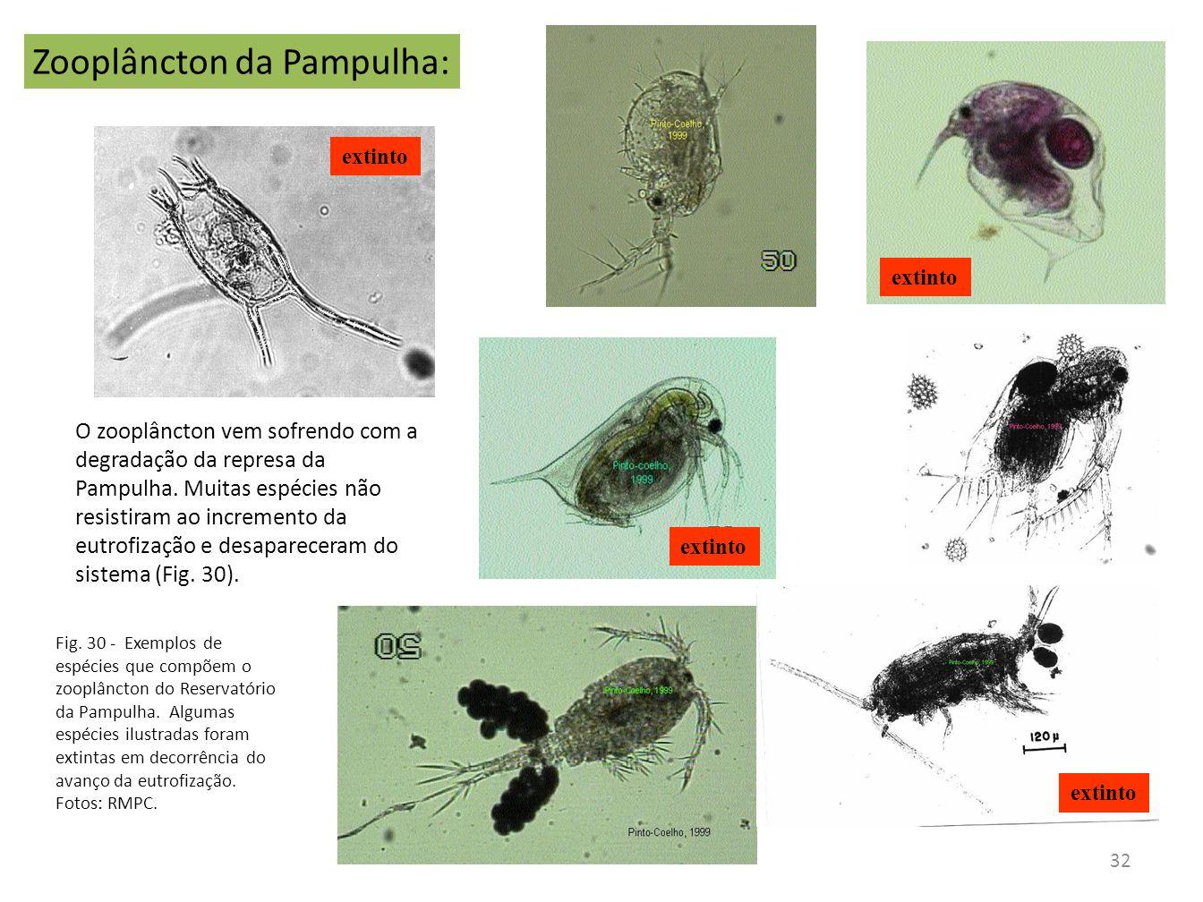 O zooplâncton vem sofrendo com a degradação da represa da Pampulha. Muitas espécies não resistiram ao incremento da eutrofização e desapareceram do si
