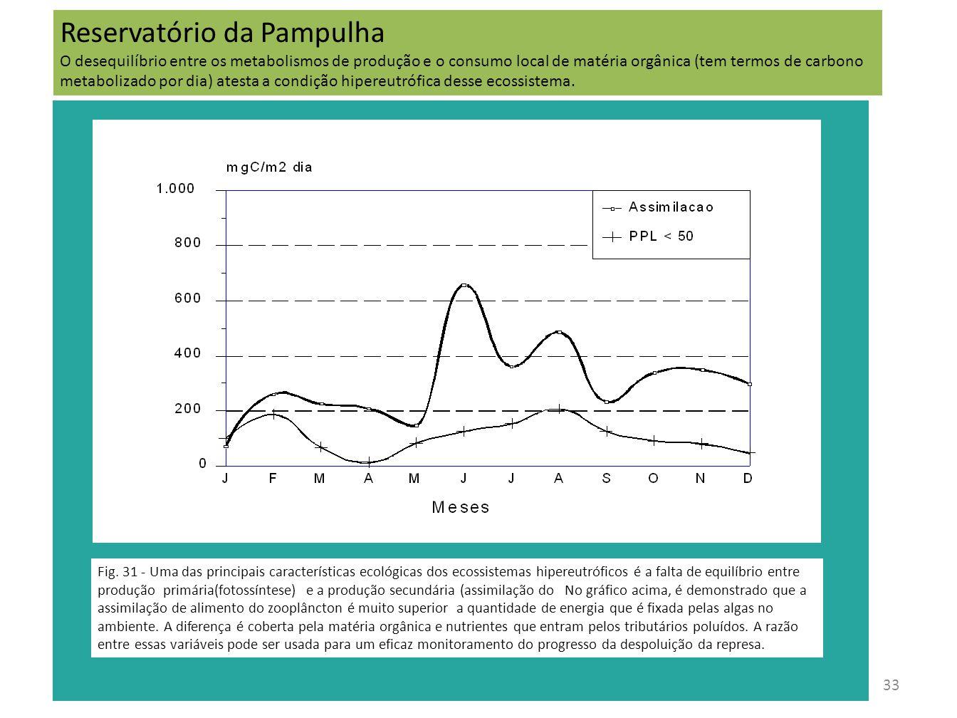 33 Fig. 31 - Uma das principais características ecológicas dos ecossistemas hipereutróficos é a falta de equilíbrio entre produção primária(fotossínte