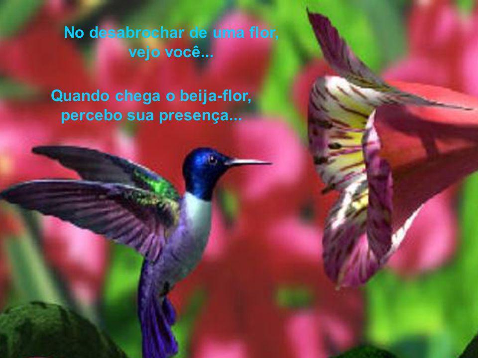 No desabrochar de uma flor, vejo você... Quando chega o beija-flor, percebo sua presença...