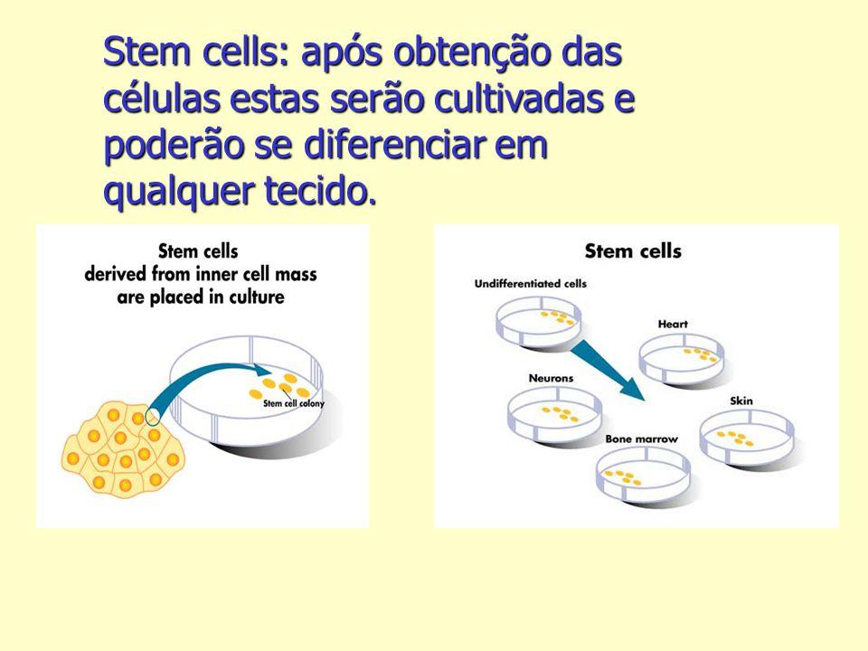Stem cells: após obtenção das células estas serão cultivadas e poderão se diferenciar em qualquer tecido.