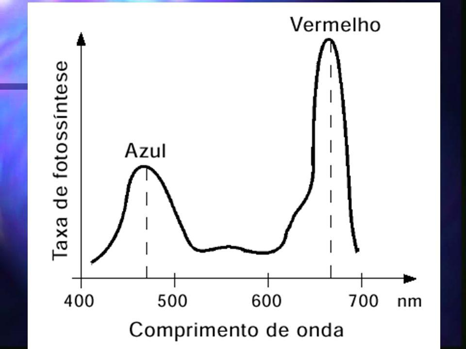 INTENSIDADE LUMINOSA PSL – ponto de saturação lumínico PS1= absorve Luz de comprimento de onda a 700nm PS2 = Absorve a 680nm