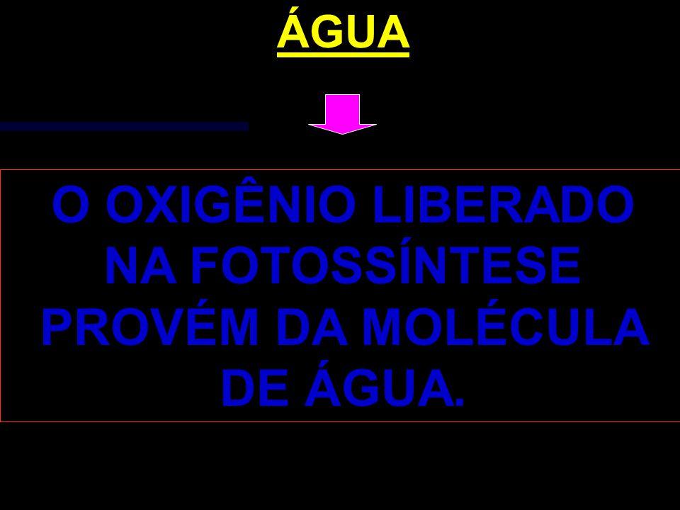 ÁGUA O OXIGÊNIO LIBERADO NA FOTOSSÍNTESE PROVÉM DA MOLÉCULA DE ÁGUA.