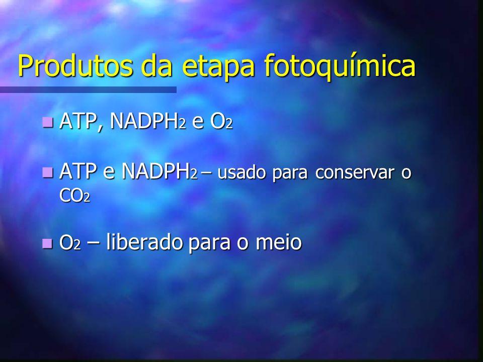 Produtos da etapa fotoquímica ATP, NADPH 2 e O 2 ATP, NADPH 2 e O 2 ATP e NADPH 2 – usado para conservar o CO 2 ATP e NADPH 2 – usado para conservar o