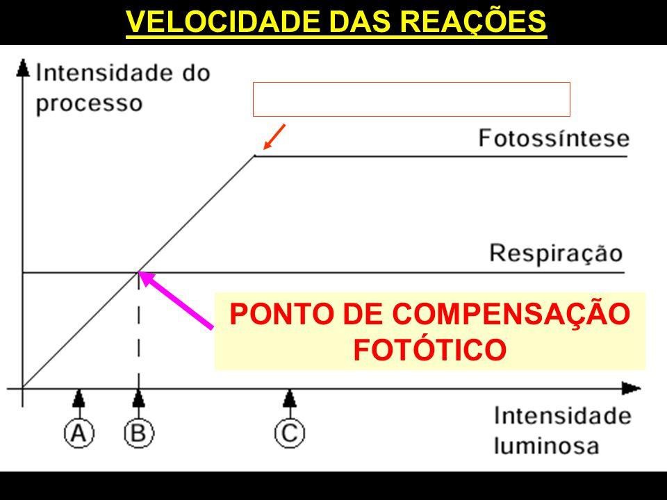 VELOCIDADE DAS REAÇÕES PONTO DE COMPENSAÇÃO FOTÓTICO P.SATURAÇÃO LUMÍNICO