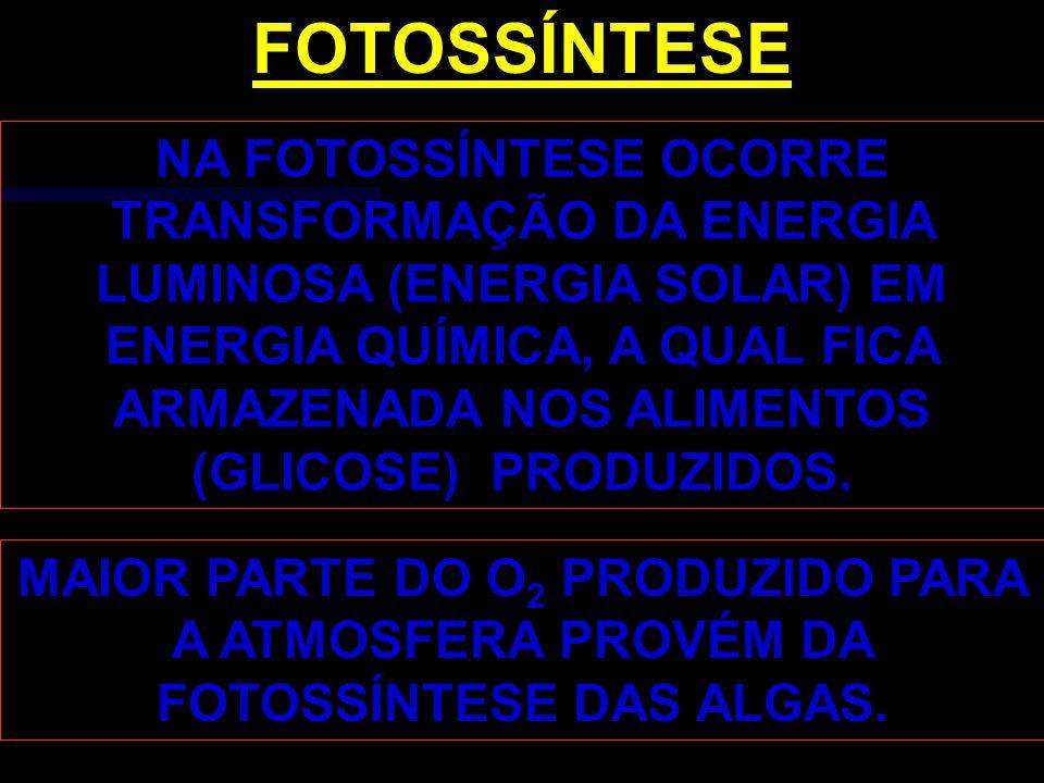 NA FOTOSSÍNTESE OCORRE TRANSFORMAÇÃO DA ENERGIA LUMINOSA (ENERGIA SOLAR) EM ENERGIA QUÍMICA, A QUAL FICA ARMAZENADA NOS ALIMENTOS (GLICOSE) PRODUZIDOS