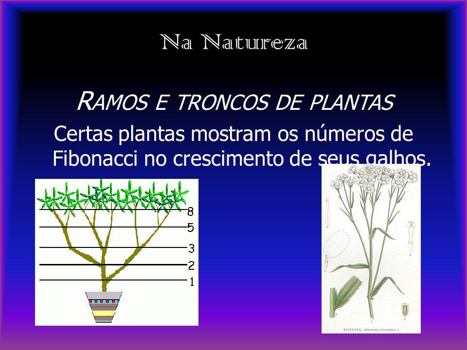 Na Natureza R AMOS E TRONCOS DE PLANTAS Certas plantas mostram os números de Fibonacci no crescimento de seus galhos.
