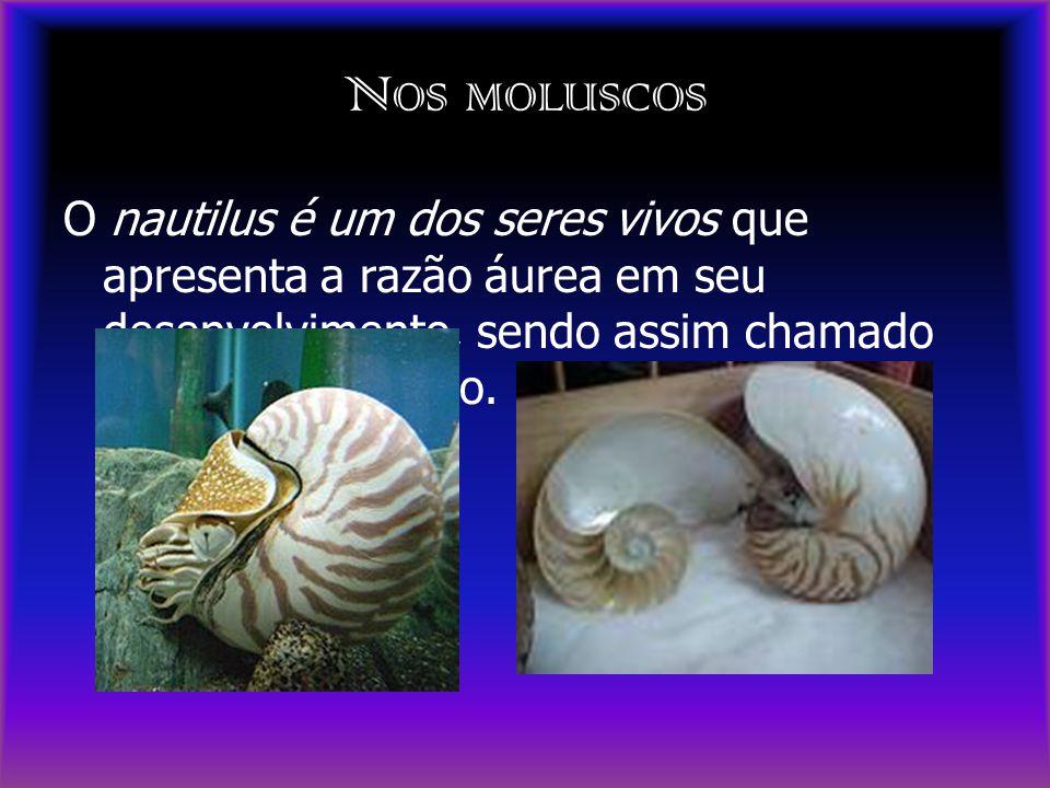 N OS MOLUSCOS O nautilus é um dos seres vivos que apresenta a razão áurea em seu desenvolvimento, sendo assim chamado de Espiral de Ouro.