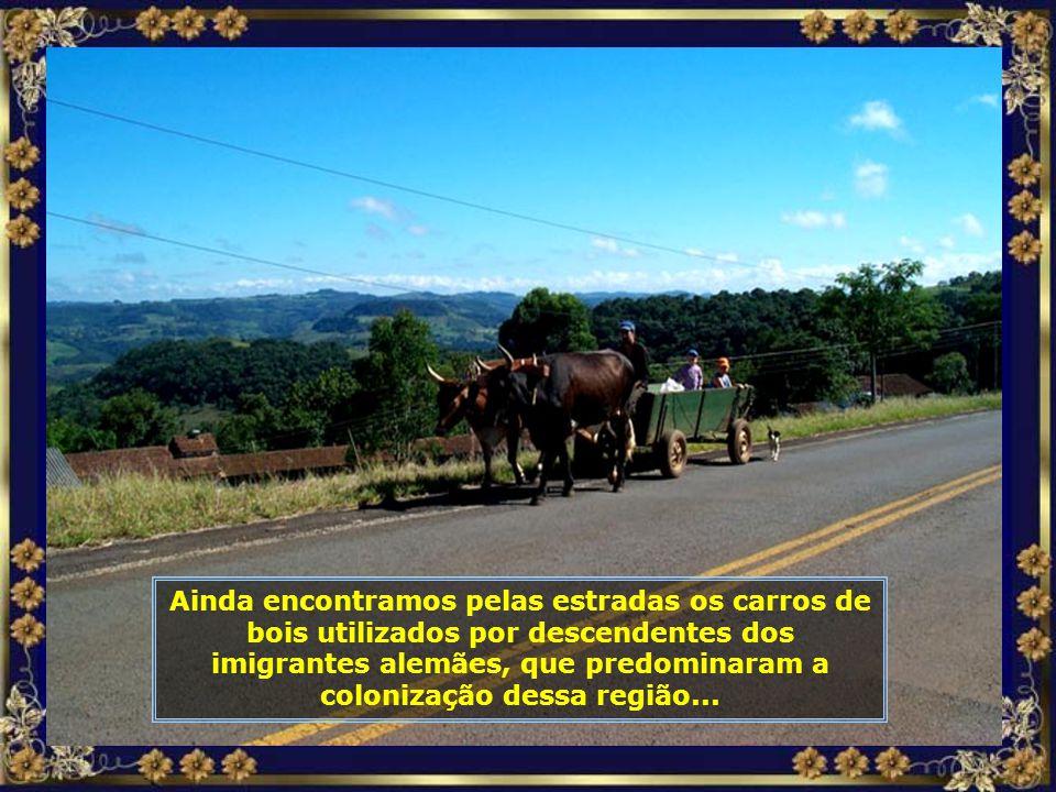 Ainda encontramos pelas estradas os carros de bois utilizados por descendentes dos imigrantes alemães, que predominaram a colonização dessa região...
