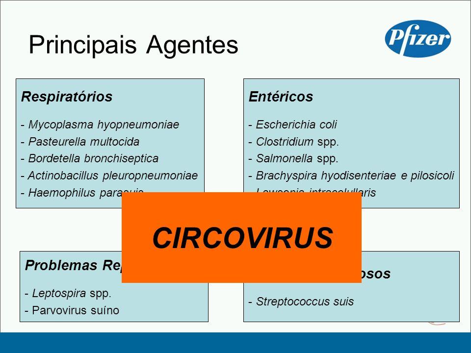 Problemas Nervosos - Streptococcus suis Problemas Reprodutivos - Leptospira spp. - Parvovirus suíno Principais Agentes Respiratórios - Mycoplasma hyop