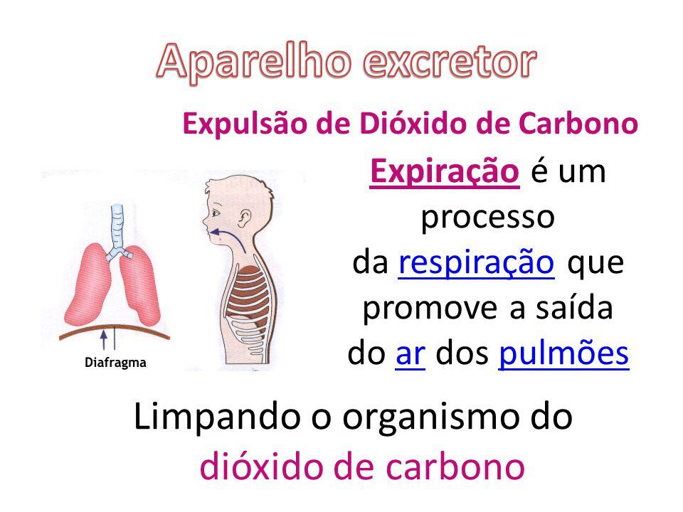 Expulsão de Dióxido de Carbono Expiração é um processo da respiração que promove a saída do ar dos pulmõesrespiraçãoarpulmões Limpando o organismo do dióxido de carbono