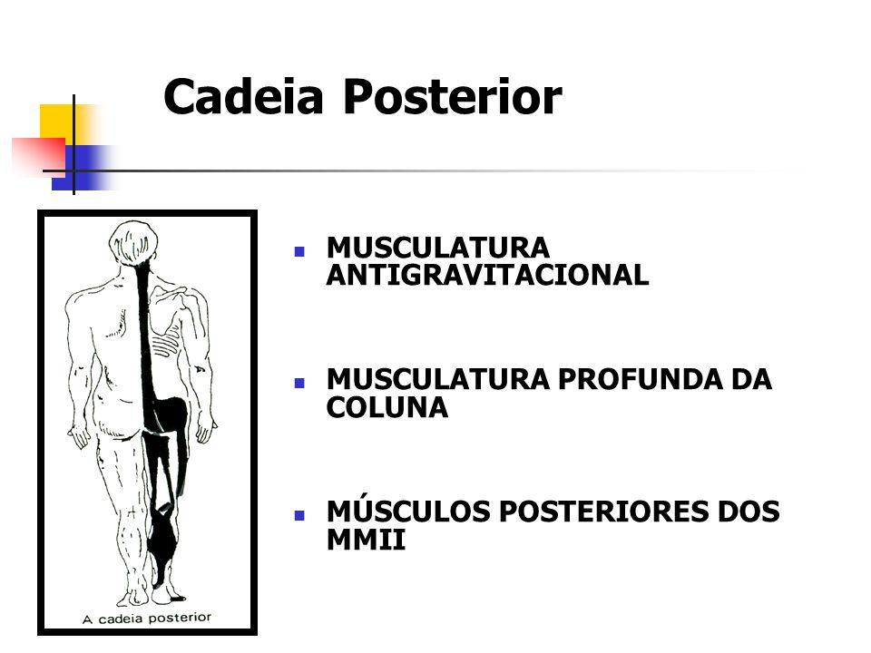 Cadeia Posterior MUSCULATURA ANTIGRAVITACIONAL MUSCULATURA PROFUNDA DA COLUNA MÚSCULOS POSTERIORES DOS MMII Souchard, 1996