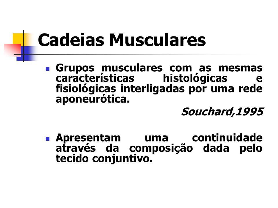 Grupos musculares com as mesmas características histológicas e fisiológicas interligadas por uma rede aponeurótica. Souchard,1995 Apresentam uma conti