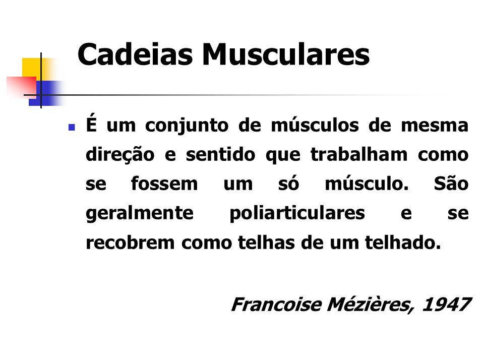 É um conjunto de músculos de mesma direção e sentido que trabalham como se fossem um só músculo. São geralmente poliarticulares e se recobrem como tel