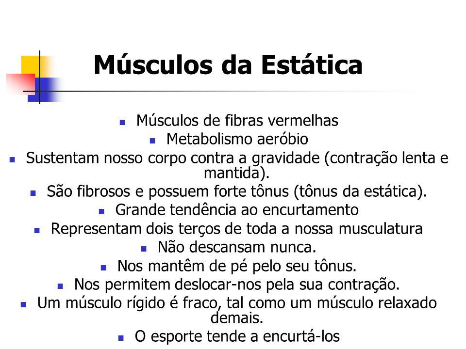 Músculos da Dinâmica Músculos de fibras brancas Metabolismo anaeróbio Não tem praticamente nenhum papel na posição ereta (contração rápida).