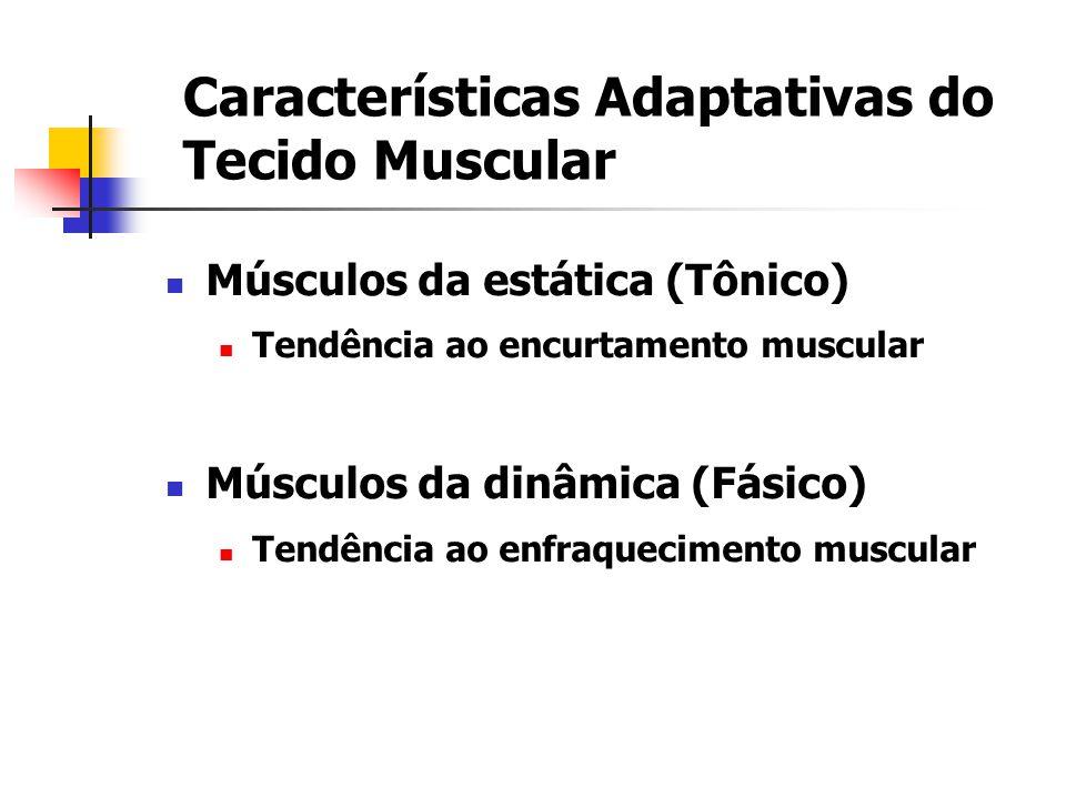 Características Adaptativas do Tecido Muscular Músculos da estática (Tônico) Tendência ao encurtamento muscular Músculos da dinâmica (Fásico) Tendênci