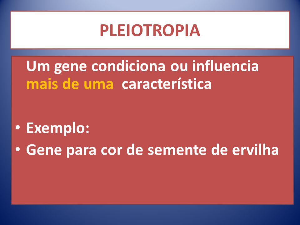 PLEIOTROPIA Um gene condiciona ou influencia mais de uma característica Exemplo: Gene para cor de semente de ervilha