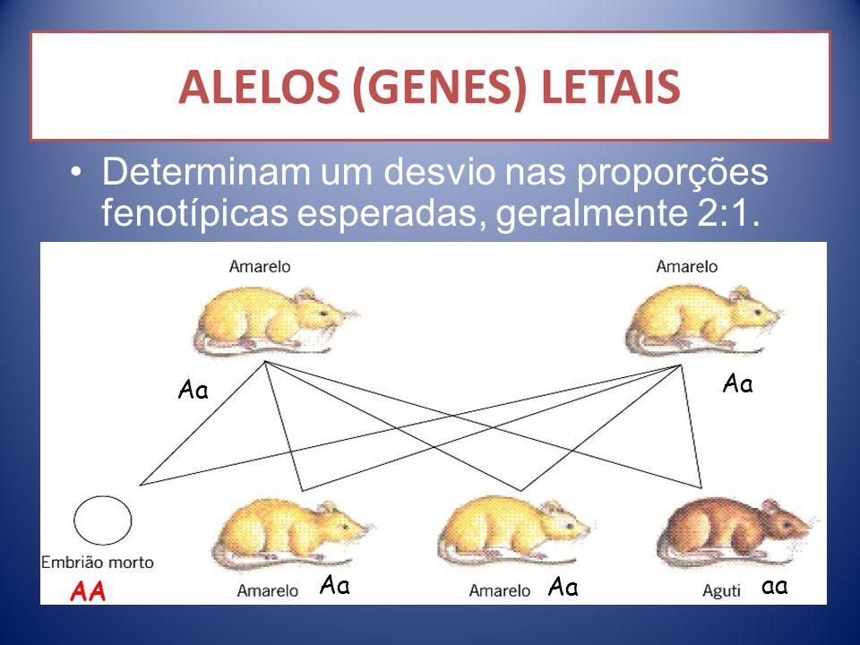 Determinam um desvio nas proporções fenotípicas esperadas, geralmente 2:1. Aa aa AA ALELOS (GENES) LETAIS