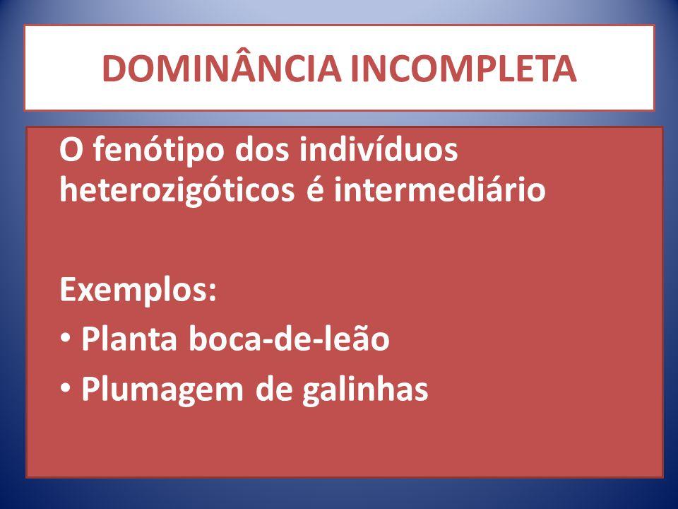 DOMINÂNCIA INCOMPLETA O fenótipo dos indivíduos heterozigóticos é intermediário Exemplos: Planta boca-de-leão Plumagem de galinhas